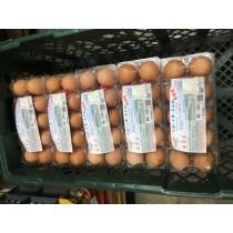 紅殼の 蜜香雞蛋 24盒裝 (一盒10顆)